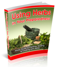 Using Herbs in Your Preparedness
